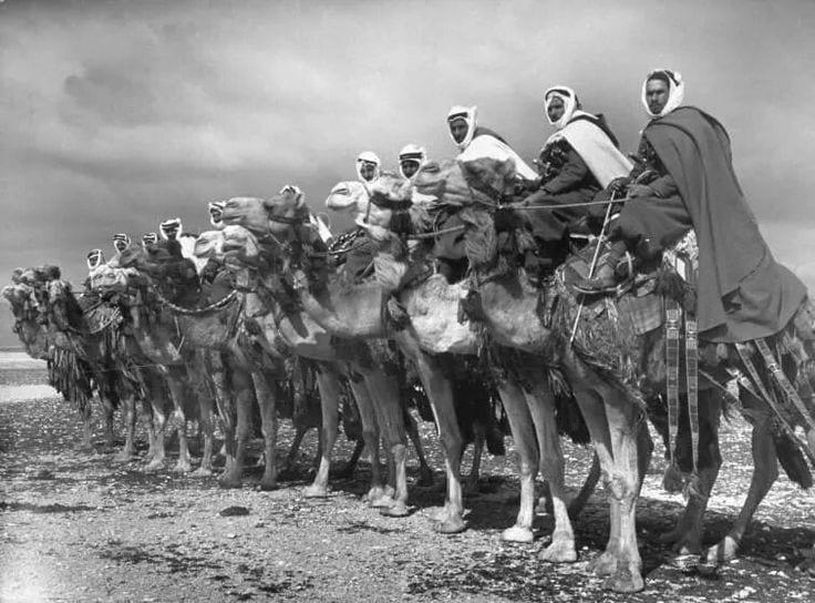 syria- camel