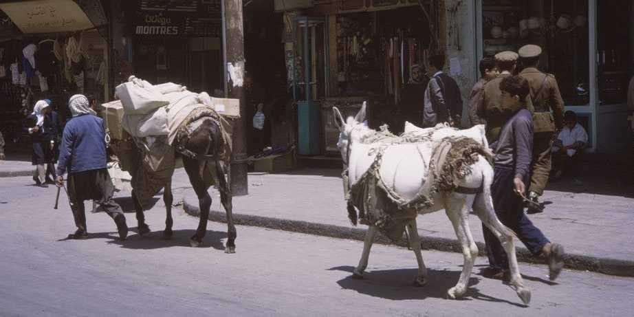 syria- donkeys
