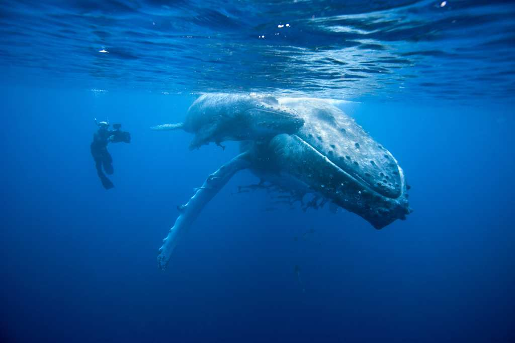 doug-and-humpback