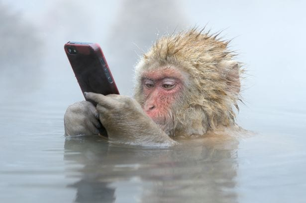 Monkey-Steels-cellphone (1)