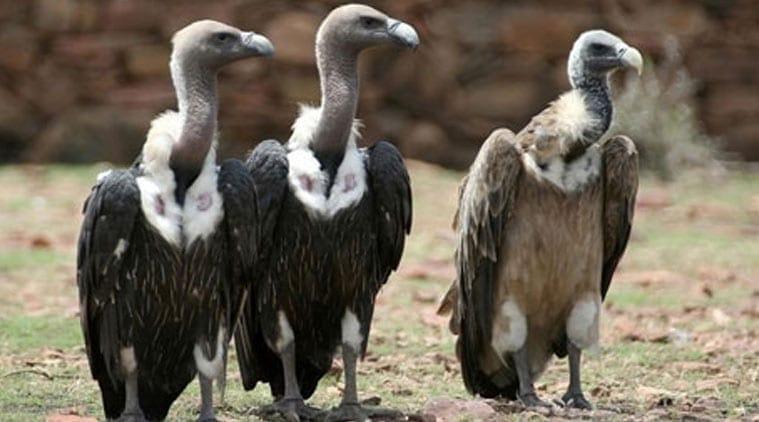 vultures-l-1