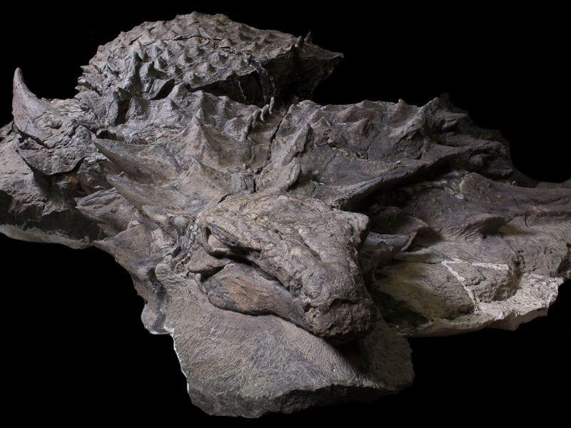 rtmp_gfd_nodosaur-uprepared