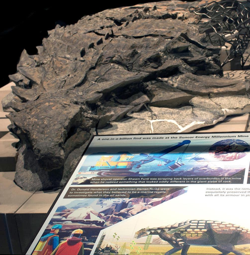 rtmp-gfd-exhibit-nodosaur
