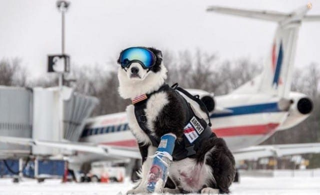 dog-with-the-coolest-job-ever-640x391