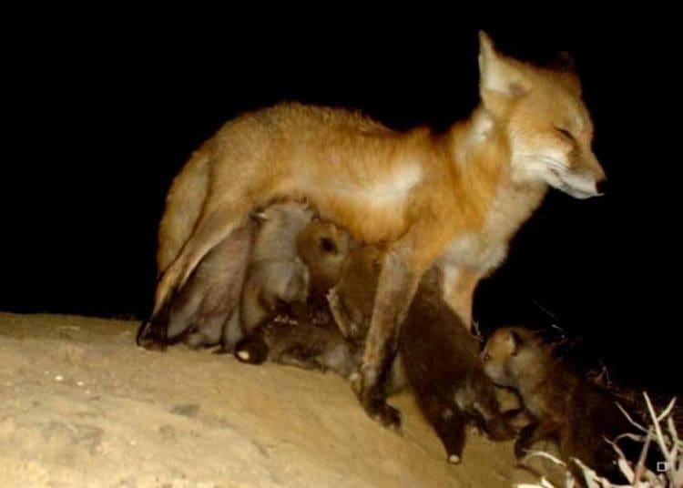 animal-feeding