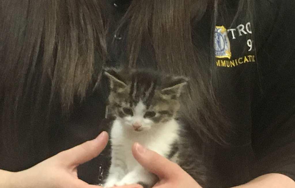 kitten 4