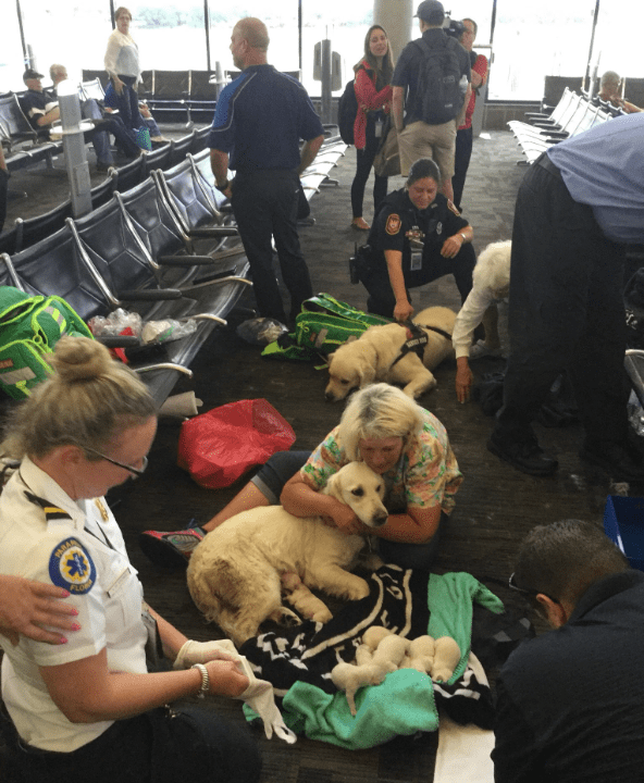 airport puppies