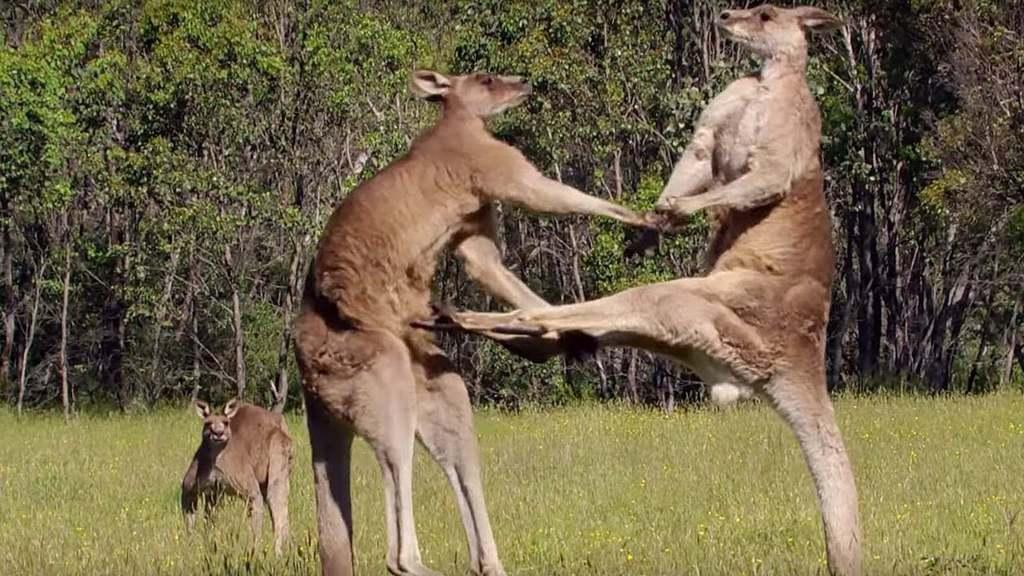 australia 41