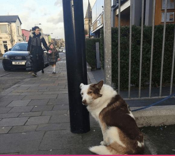 sad dog- resting