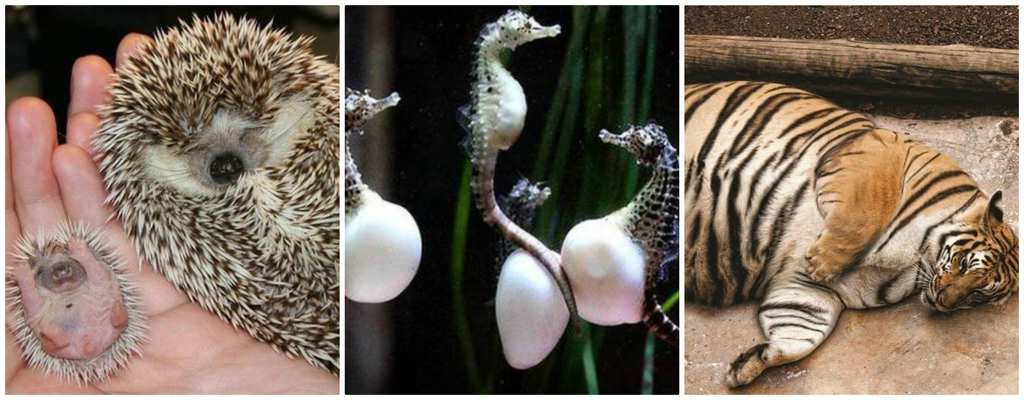 The Most Adorable Pictures Of Pregnant Animals Who Look ...