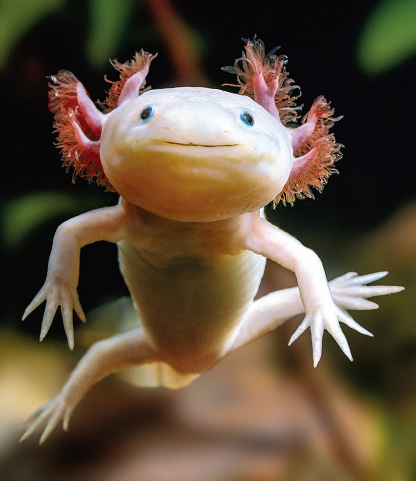 25 Weird Animals From Around the World That Actually Exist