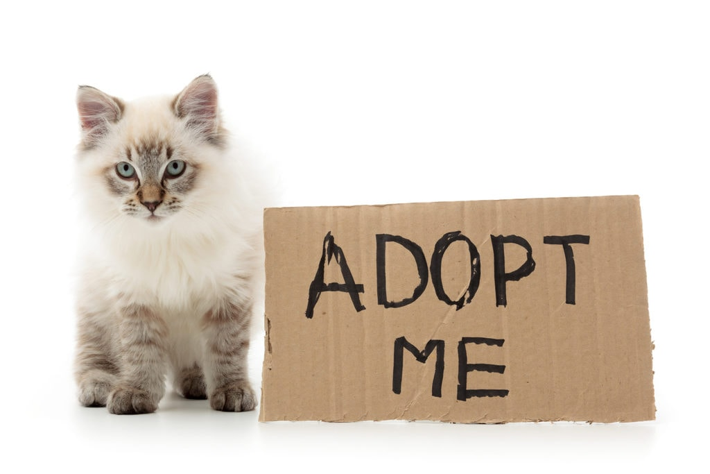 "A cat sitting next to an ""Adopt me"" sign"