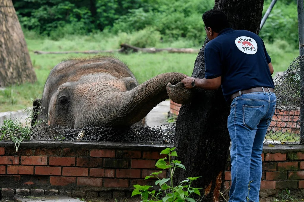 Kaavan, the world's loneliest elephant during a visit from Four Paws (the organization that fought to release him)