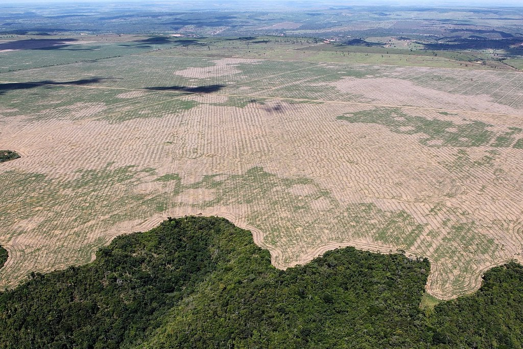 Deforestation in the Amazon forest