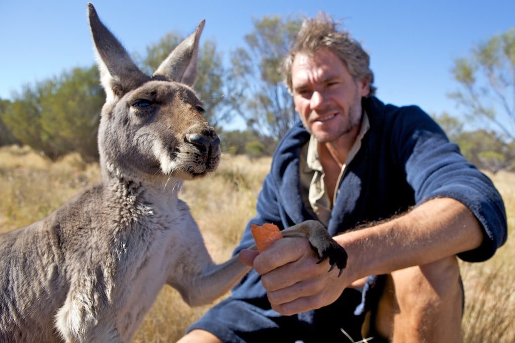 Man giving kangaroo a carrot