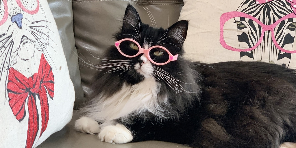 Truffles the stray cat pictured on a couch, wearing pink glasses